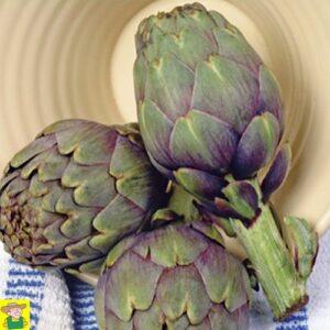 12050 Artisjok Violet de Provence - Artichaut Violet de Provence