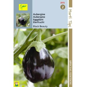 12072 Aubergine Black Beauty