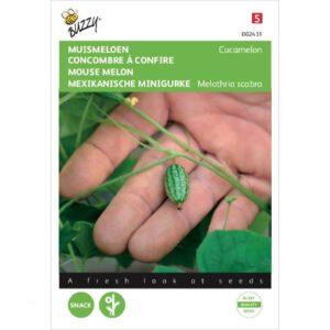 02431 Muismeloen, Cucamelon - Concombre à confire, Melothria scabra