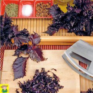11172 Japanse peterselie Roodbladig - Persil Japonais à feuilles rouges - Perilla - Shiso