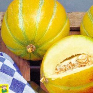 12421 Meloen Ogen - Melon Ogen