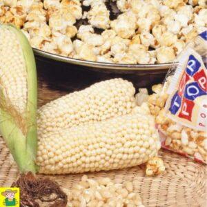 12424 Pofmaïs Plomyk - Maïs Popcorn Plomyk
