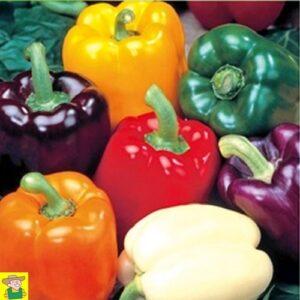 124355 Paprika 5 kleuren - Poivron 5 couleurs