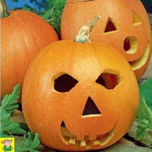 124775 Pompoen Jack O lantern - Courge Halloween Jack O lantern