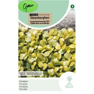 12492 Gele Breedbladige Postelein - Pourpier Doré à feuilles larges