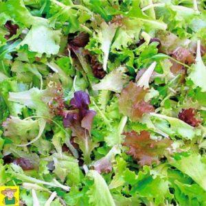 12688 Snijsla Frans salademengsel, Mesclun - Mesclun