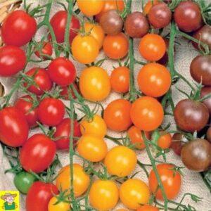 12828 Tomaat Cherry Mixed, Kerstomaten 4 Kleuren - Tomates cerise 4 Couleurs