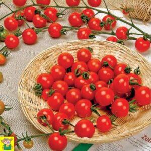 12834 Kerstomaat Super Sweet 100 F1 - Tomate à cerise Super Sweet 100 F1