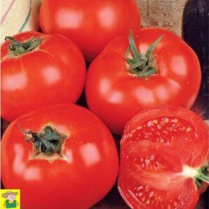 12844 Tomaat Celebration F1 - Tomate Celebration F1