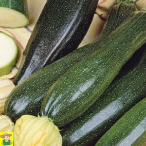 12960 Courgette Black Beauty