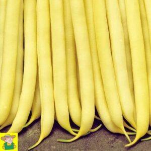 13224 Lage fijne boterbonen Minidor - Haricots nains beurre