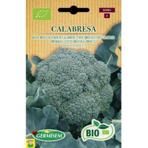 73003 Broccoli Groene Calabrese bio - Chou Brocoli Vert Calabrais bio