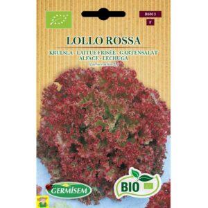 76013 Snijsla Lollo Rossa Bio - Laitue Frisée Lollo Rossa Bio