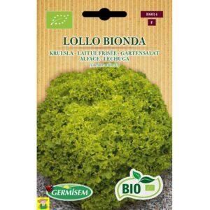 76014 Snijsla Lollo Bionda bio - Laitue Frisée Lollo Bionda bio