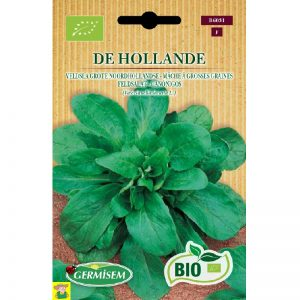 76031 Veldsla Grote Noordhollandse bio - Mâche à Grosse Graines de Hollande bio