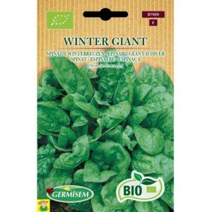 77020 Spinazie Winterreuzen bio - Epinard Géant d hiver bio