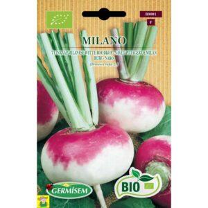 79001 Tuinraap Milanese - Navet Potager de Milan bio