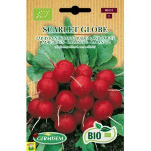 79035 Radijs Ronde Rode - Radis Rond Rouge Scarlet Globe bio