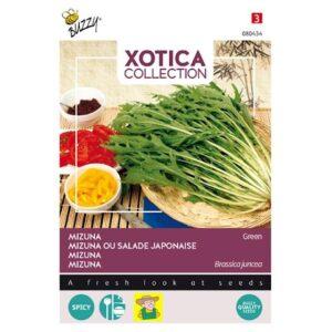80434 Mizuna - Salade Japonaise