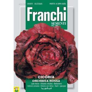 80628 Roodlof Orchidea Rossa - Chicorée Orchidea Rossa