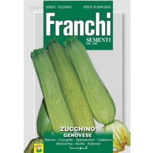 82060 Courgette Genovese