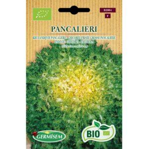 G 72004 Andijvie Gekrulde Pancalière Bio - Chicorée Grosse Pancalière Bio