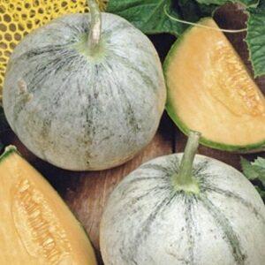 Meloensoorten