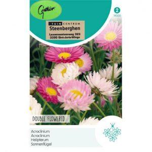 14000 Acroclinium Dubbele bloemen - Acroclinium Fleurs Doubles