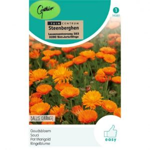 14080 Calendula Officinalis Ball s Orange - Goudsbloem - Souci