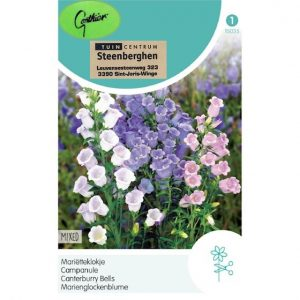 15035 Campanula Medium Mix - Mariëtteklokje - Campanule Fleurs Simples