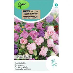 15038 Campanula Medium Cup and Saucer - Mariëtteklokje Dubbelbloemig - Campanule Fleurs Doubles
