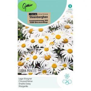 15310 Chrysanthemum Silver Princess - Lage Margriet - Chrysanthème Nain