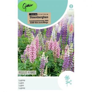 15420 Lupine Russell s Hybrids - Lupine - Lupin