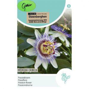 15555 Passiflora Caerulea - Passiebloem - Passiflore