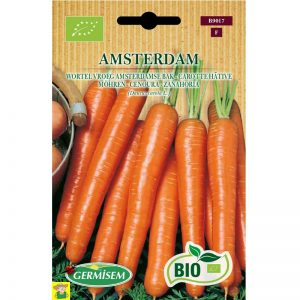 79017 Wortel Amsterdam bio - Carotte Amsterdam Bio