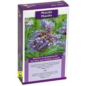 81525 Phacelia - Phacélie