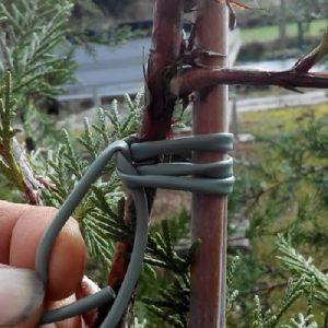 Elastische Bindgaine, bindbuis - Lien horticole