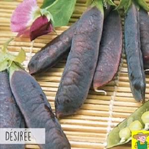 13430 Erwt Desiree - Pois Desirée