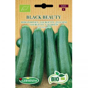 74018 Courgette Black Beaury Bio
